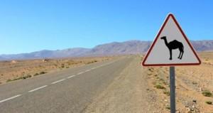 route-sahara